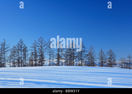 Snow-covered trees in snowfield - Stock Photo