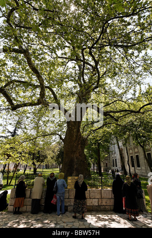 Women, Muslima, praying at a tomb under a mighty tree, Prince mosque Sehzade Camii, Istanbul, Turkey - Stock Photo