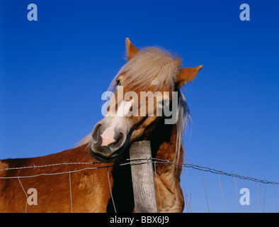 Horse beside barbed wire fence - Stock Photo
