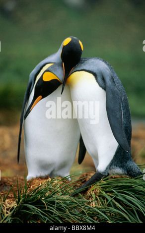 Penguins standing together - Stock Photo