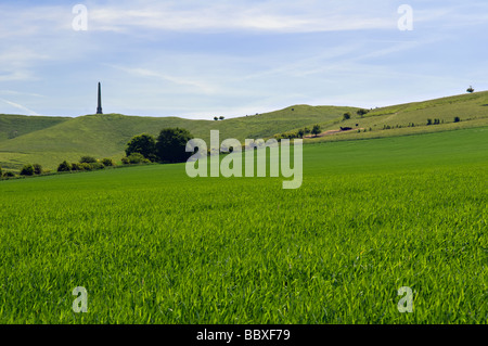 Scenic view of the Lansdowne monument taken at Cherhill near Calne, Wiltshire with lush green fields in foreground - Stock Photo