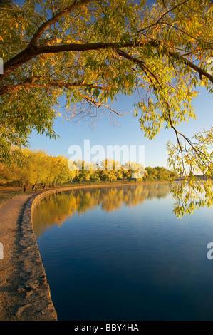 Autumn Colour Bowen Park Reflected in Lake Burley Griffin Canberra ACT Australia