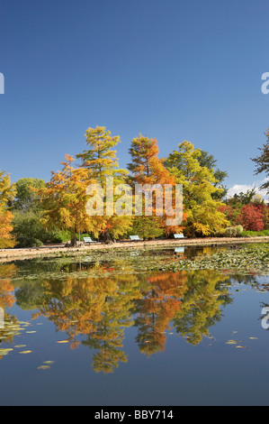 Autumn Colour Reflected in Nerang Pool Commonwealth Park Canberra ACT Australia - Stock Photo