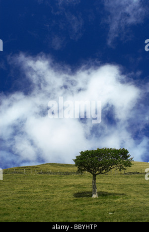 Lone tree on hillside - Stock Photo