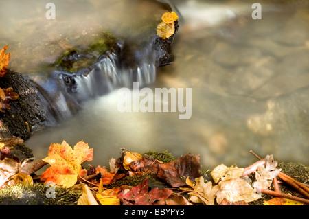 Beautiful Mountain Waterfall in Autumn - Stock Photo