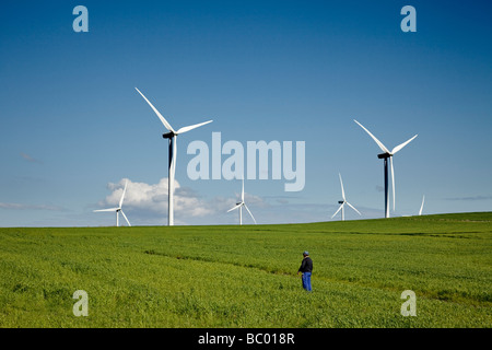 Fields of grain and wind power mills in Tarifa Cadiz  Andalusia Spain - Stock Photo