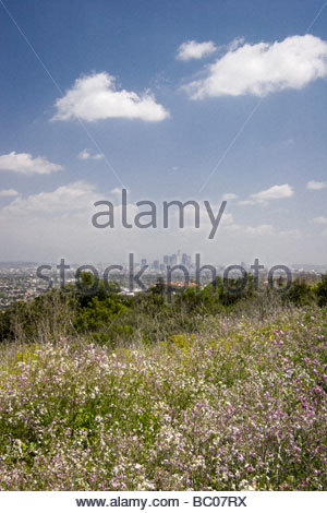 Spring Wildflowers and Los Angeles Skyline in Distance Kenneth Hahn State Recreation Area California - Stock Photo