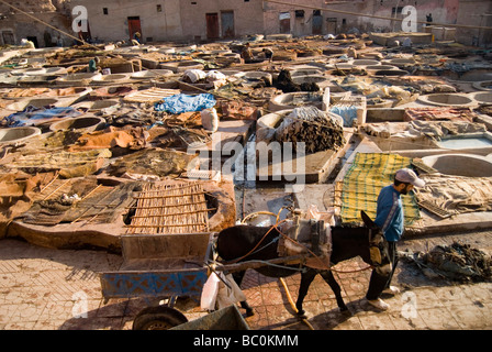 A man with his donkey drawn cart working in the tannery in Marrakesh in the morning Morocco North Africa - Stock Photo