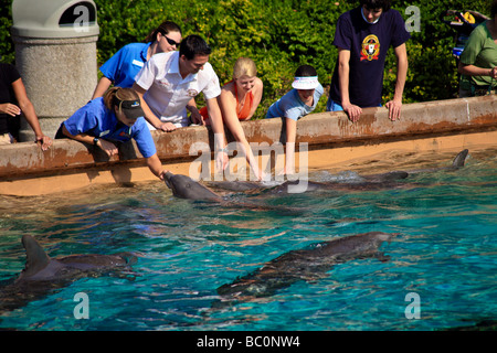 Interaction Of Dolphins And People At Feeding Time In A Outdoor Aquarium In  Florid   Stock