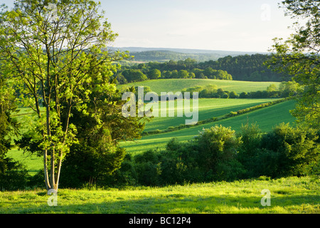View south from North Downs at Newlands Corner, Surrey, UK - Stock Photo