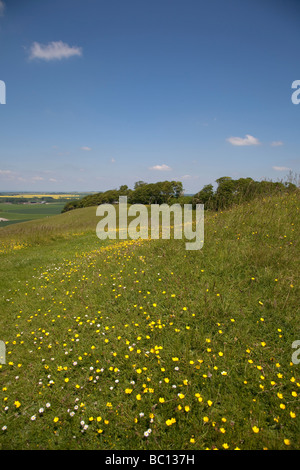 buttercups in a wildflower meadow on a sunny summer day in the wiltshire countryside - Stock Photo