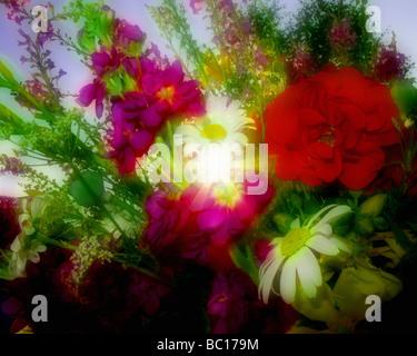FLOWER ARRANGEMENT: Summer Flowers - Stock Photo