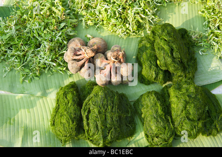 Mekong river moss, a local delicacy of Luang Prabang Laos - Stock Photo