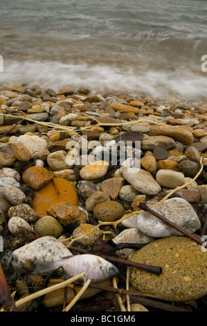 A small dead fish lies in the flotsam line with other debris on the rocky shore of a freshwater lake - Stock Photo