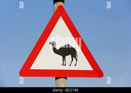 Beware Of Camel Sign In Dubai - Stock Photo