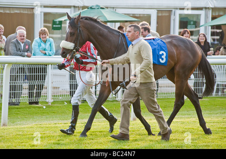 Horse being led to start of race - Stock Photo