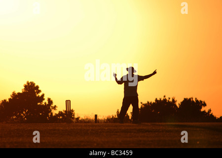 Umpire signalling during a cricket match on a summer's evening in Luton, England. - Stock Photo