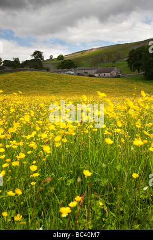 Swaledale wild flower meadows near Healaugh Yorkshire Dales National Park - Stock Photo