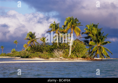 An island in the Fakarava lagoon Fakarava Atoll Tuamotus Archipelago French Polynesia - Stock Photo