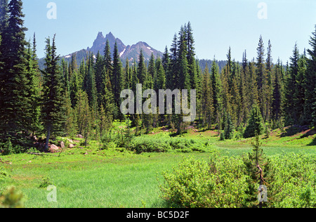 Three-Fingered Jack, from a former meadow near Jorn Lake - Stock Photo