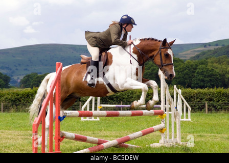 Woman rider in a show jumping competition at Pandy Show, nr Abergavenny, Wales, UK. Brown & white horse jumps a - Stock Photo