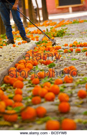 Seville oranges Seville Andalucia Spain - Stock Photo