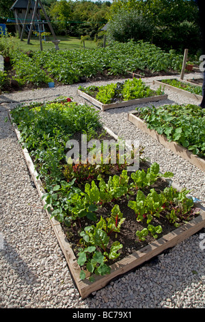 Vegetables growing in raised beds on garden plot with greenhouse in ...