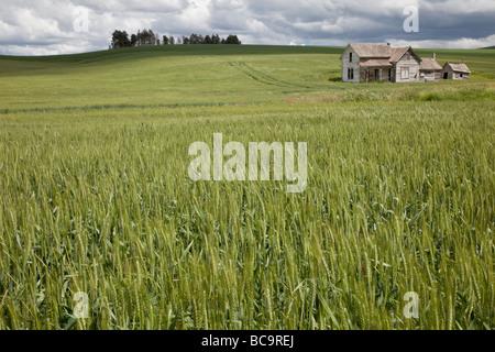 Near Pullman, Washington state, Palouse Country. Abandoned House, New Wheat Field. - Stock Photo