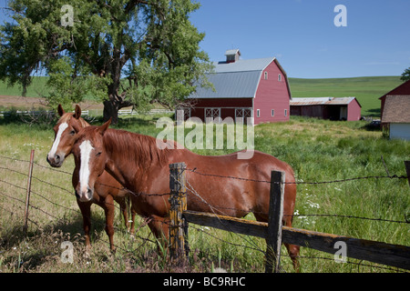 Near Pullman, Washington, in Palouse Country, Southeastern Washington State. Horses and Red Barn. - Stock Photo