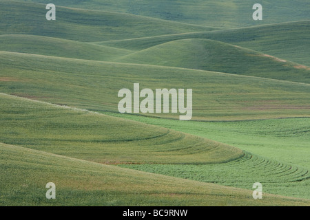 Whitman County, Palouse Country, Southeastern Washington State. Cultivated Fields of Wheat and Lentils. - Stock Photo