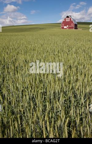 Near Pullman, Washington state, Palouse Country. Red Barn and Wheat Field. - Stock Photo