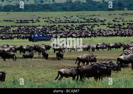 Watching some of the 1 5 million WILDEBEESTS which migrate across the SERENGETI PLAINS MORU KOPJES TANZANIA - Stock Photo