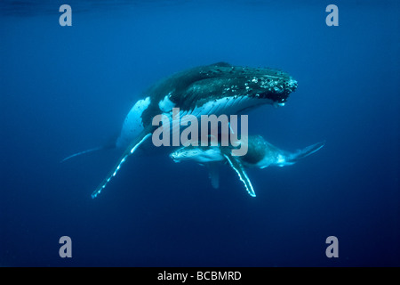Humpback whales - Stock Photo