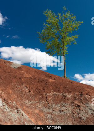Single green tree growing on a steep hill in Badlands