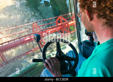 Driver in cab of Claas Lexion 540 combine harvester, harvesting Summer barley - Indre-et-Loire, France. - Stock Photo