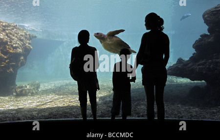 women and child watching sea turtle in an aquarium - Stock Photo
