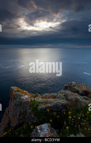 Looking out to sea from St.Agnes Head  with a dramatic sky and Golden Samphire in the foreground. - Stock Photo
