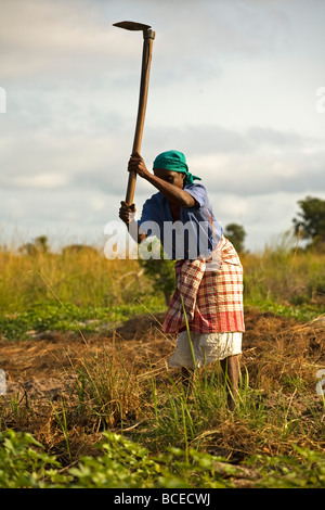 Mozambique, Inhaca Island. An Mozambican woman works on her land with a traditional farming tool; the hoe. - Stock Photo