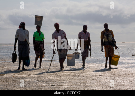 Mozambique, Inhaca Island. Local ladies carry their clam catch in the early morning at low tide on the beach. - Stock Photo
