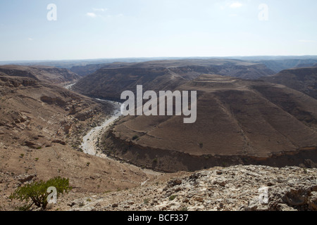 Oman, Dhofar. A typical Wadi in the Dhofar region of Oman in the dry winter season, with a Frankincense tree in - Stock Photo