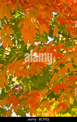 Wiscasset, Maine, New England, United States of America, North Stock Photo, Royalty Free Image ...