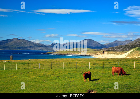 Highland cattle in a field Isle of Harris, Outer Hebrides, western isles, Scotland, UK 2009 - Stock Photo