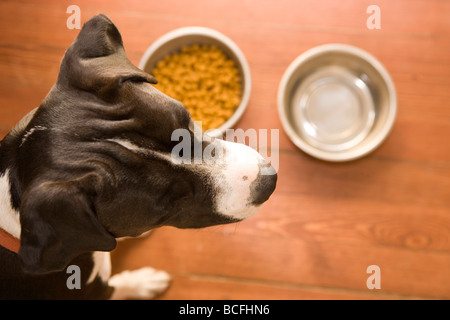 close up of a dog's head looking away from her food dishes, not interested in what is offered - Stock Photo