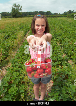 young girl picking strawberries in field during summer - Stock Photo