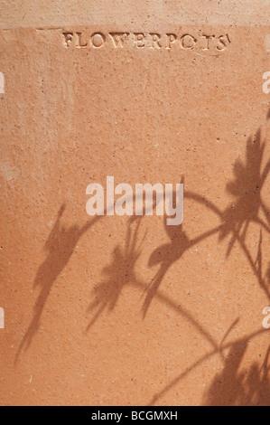 Flower shadows on a terracotta flowerpot - Stock Photo