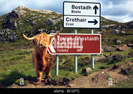 Highland cow beside a road sign near Bostadh Isle of Lewis, Outer Hebrides, western isles, Scotland, UK 2009 - Stock Photo