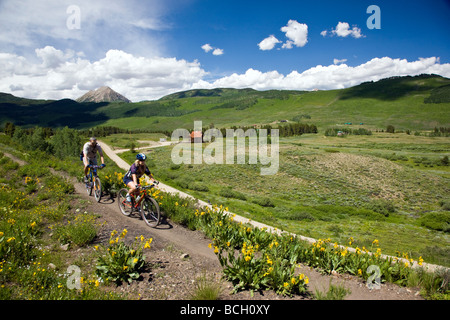 Mules Ears Asteraceae Sunflower Family grow in a meadow along the Woods Walk Lower Loop Trails Crested Butte Colorado - Stock Photo
