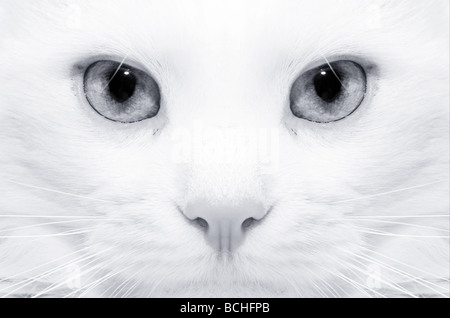 Macro picture of a white cat with yellow eyes - Stock Photo