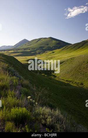 Wildflowers grow along Washington Gulch near Mount Crested Butte Colorado USA - Stock Photo