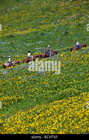 Tourists head out on a trail ride on horseback below Snodgrass Mountain Mount Crested Butte Colorado USA - Stock Photo